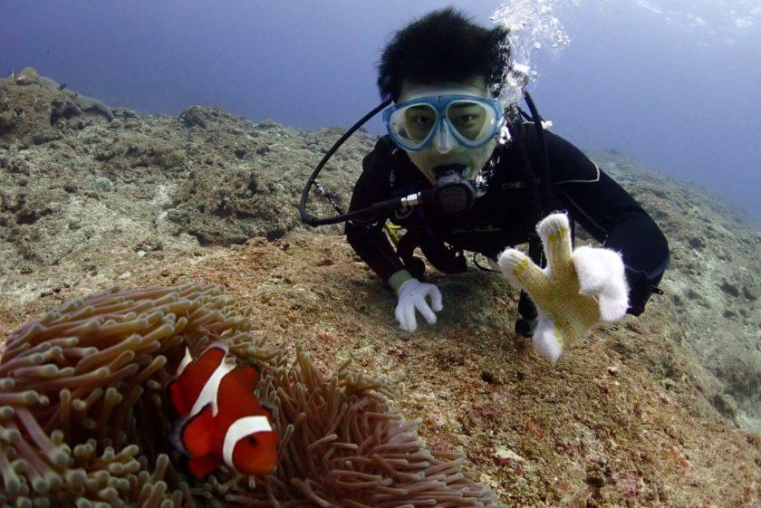 宮古島でカクレクマノミと一緒に体験ダイビング