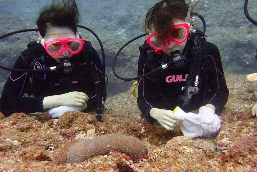 下地島サンゴホールで体験ダイビング