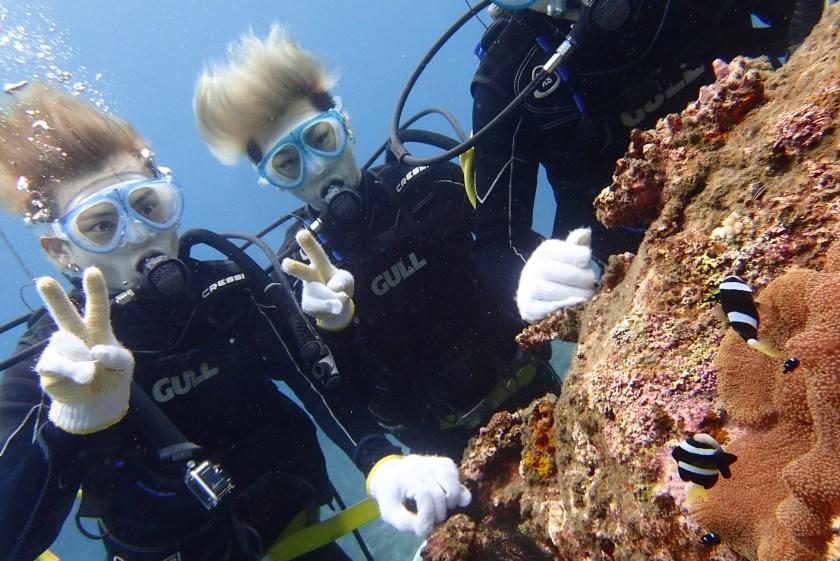 体験ダイビング・クマノミ