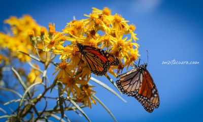 (Foto:mizitacuaro.com)