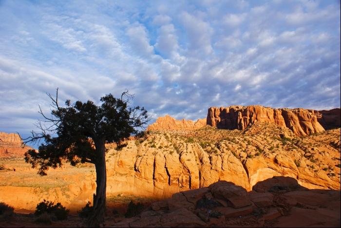 Arizona Red Rock