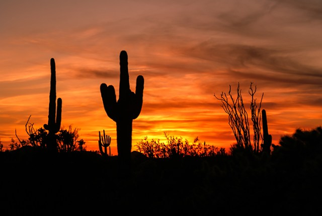 Arizona Saguaro Cactus Sunset