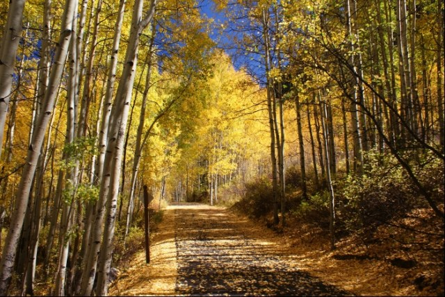 Vail Colorado Fall Bike Path