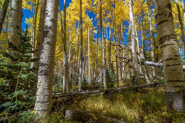 Colorado Fall Hike in the Aspens