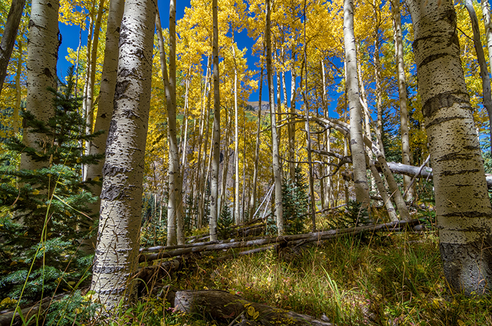 Colorado Fall Hike in the Aspens