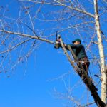 How to Take Down a Dangerous Tree