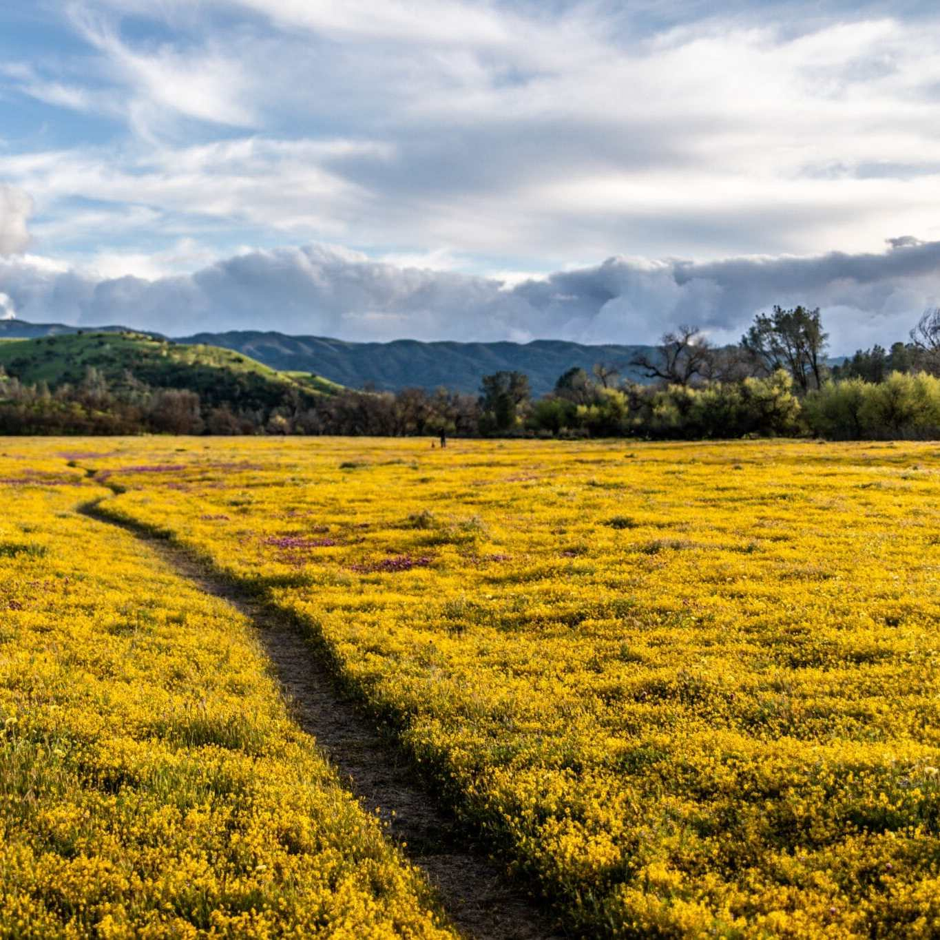 California Super Bloom, Shell Creek Road Meadow in bloom