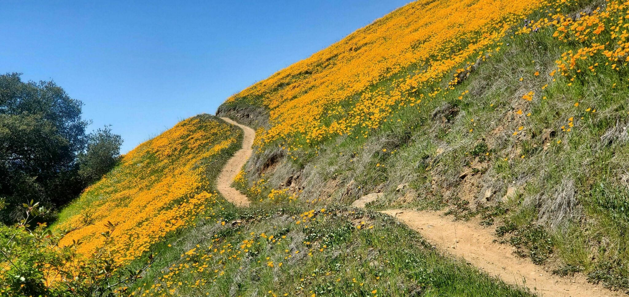 california super bloom st helena moore creek
