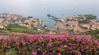 l'île aux fleurs commence à nous montrer ses possibilités