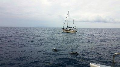 Oh ! un bateau (à côté des dauphins)