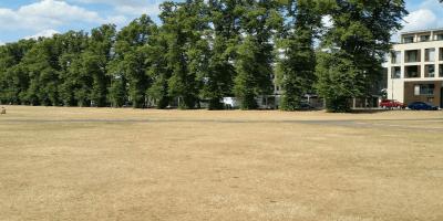 Cambridge Parker's Piece drought summer 2018