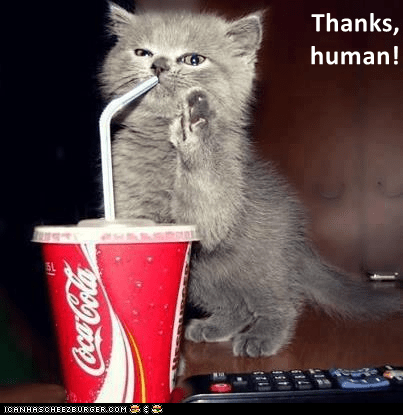 Cat says thank you