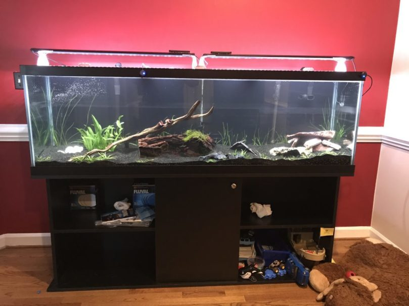 New house - back in the aquarium hobby