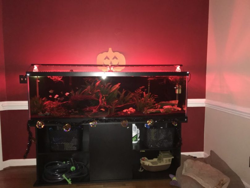 Halloween tank lights