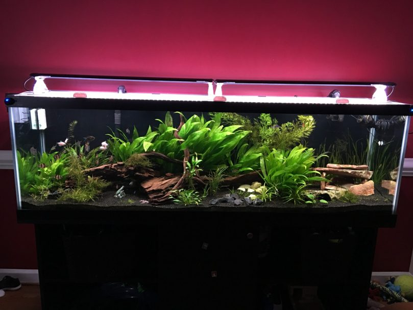 Finished Aquarium
