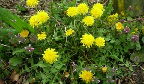 zdjęcie: www.herbalrootszine.com