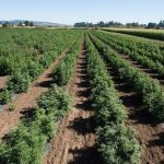 Sky S The Limit For Hemp Farming In Michigan Mlive Com