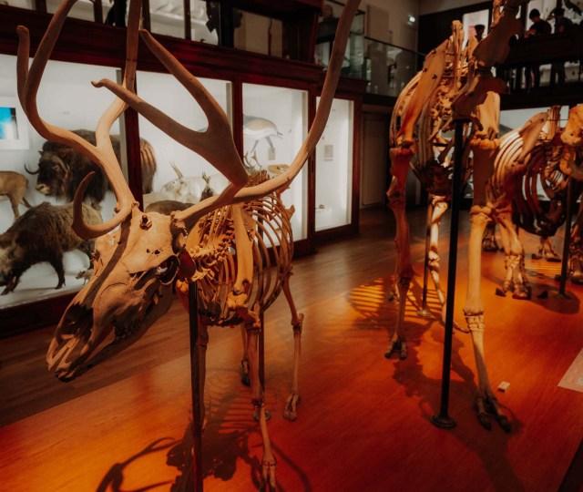 musée d'histoire naturelle de nantes