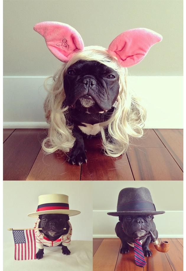 Animales en Instagram - trotterpup