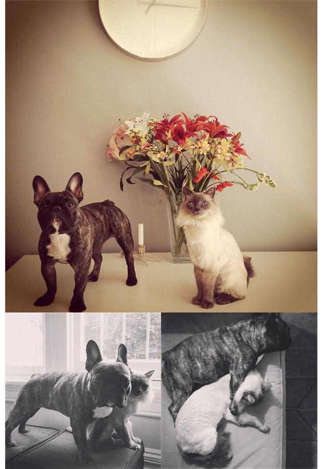 Animales en Instagram - _unlikelyfriends_