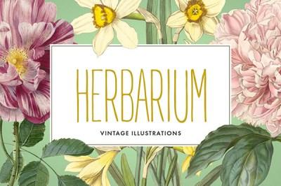 Vintage Herbarium Illustrations | Recursos gratuitos de junio para diseñadores  | mlmonferrer.es