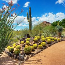 DESERT GETAWAY:  Scottsdale, Arizona