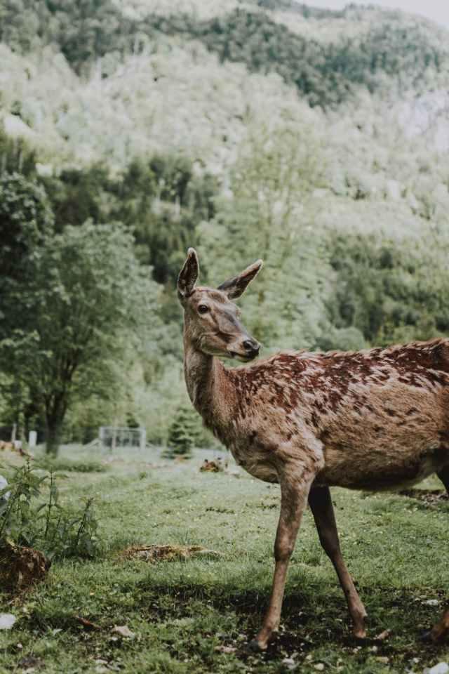 cute roe deer pasturing on green meadow in wild valley