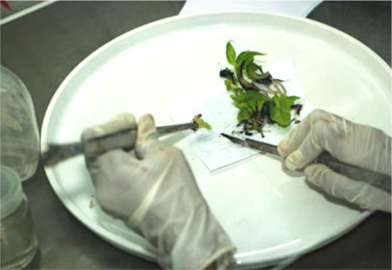Plant Tissue Cultural Lab