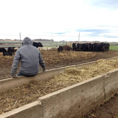 MN Agriculture: Ammann Family Farms, Century Farm