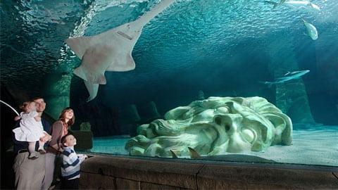 Sea Life Underwater Aquarium