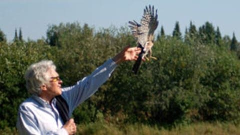 international wolf center holding an eagle