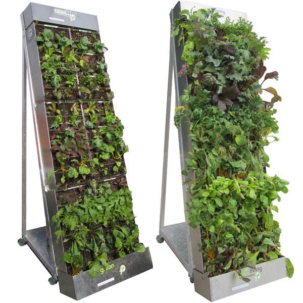 How Grow Vegetable Garden Apartment