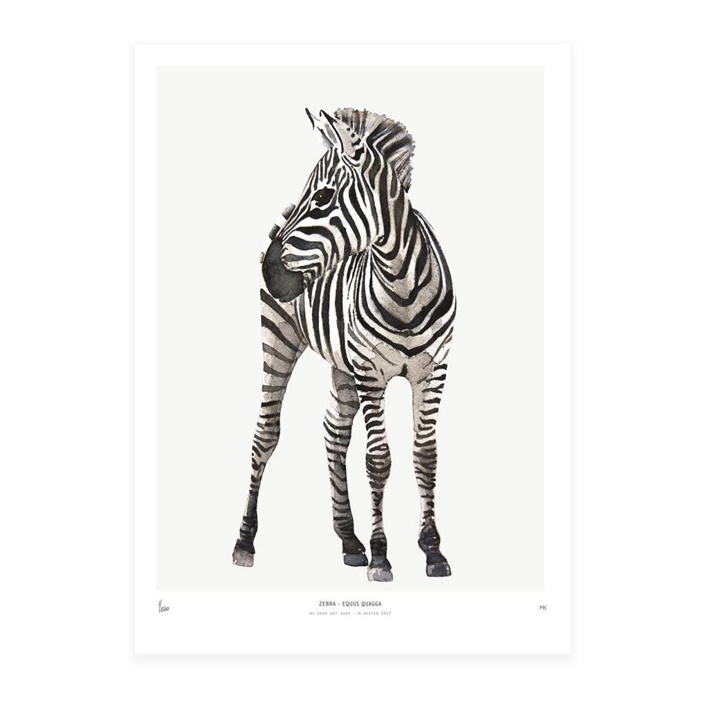 Poster Into The Wild 30x40 Zebra