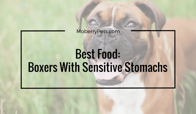 Best food for boxers with sensitive stomachs