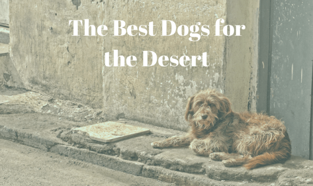 Best Dogs for a Desert Climate