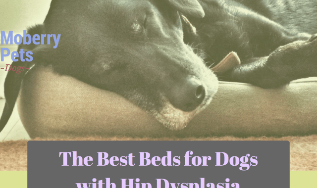 The Best Beds for Dogs with Hip Dysplasia