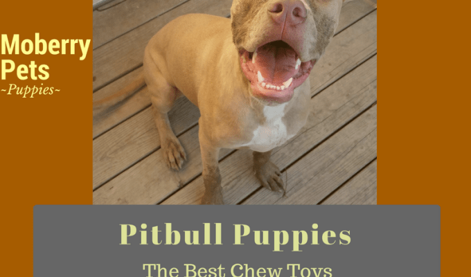The Best Chew Toys for Pitbull Puppies