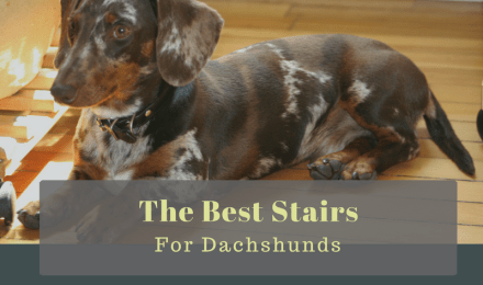 Best Pet Stairs for Dachshunds