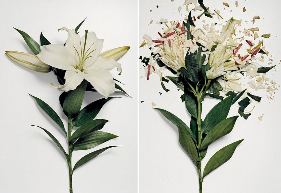 Bunga-bunga Pecah 5