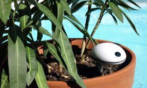 Plant Sensor