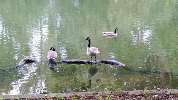 duck2scene