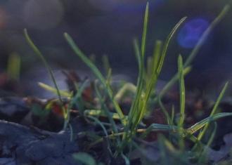 100% Crop aus JPG der Kamera