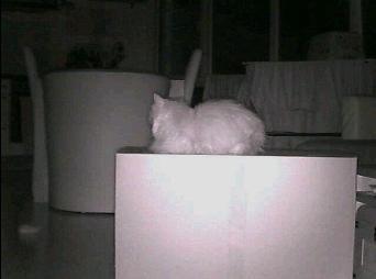 Elro snapshot at night
