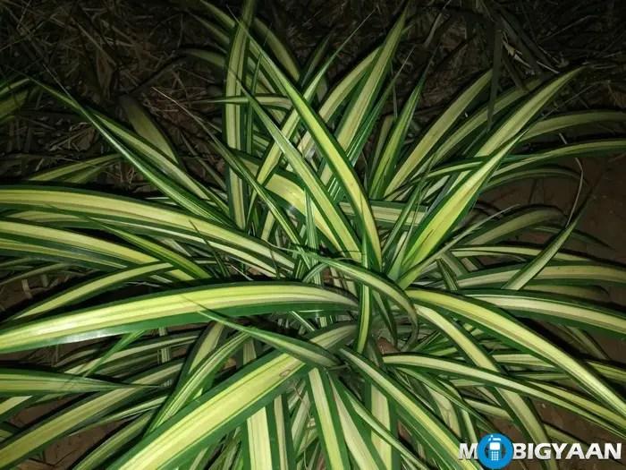 LeEco-Le-Max-Camera-Samples-Night-Shots-plant-pattern-flash