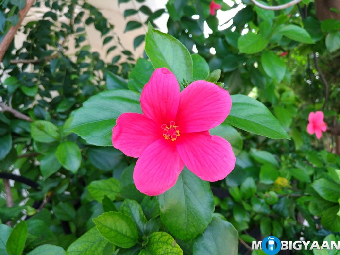ASUS-Zenfone-3-Camera-Samples-ZE520KL-13