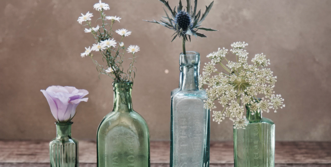 Plants in a variety of glass bottles