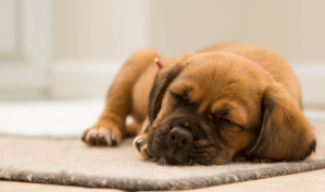 A puppy sleeping on a mat