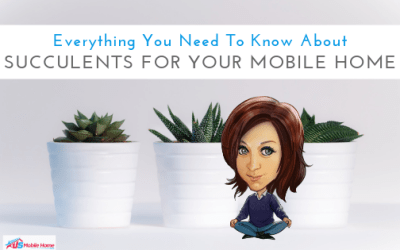 Everything You Need To Know About Succulents For Your Mobile Home