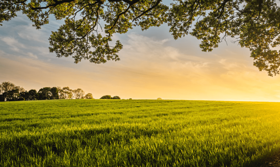 Open green field with sunset in the background