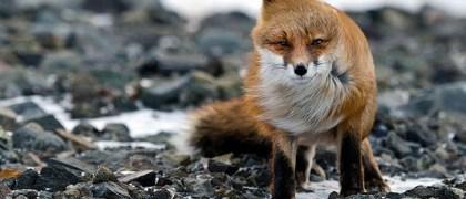 fox-photos-mobilemag